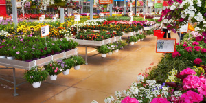Bardin Garden Center - Lancenigo (TV) Italy
